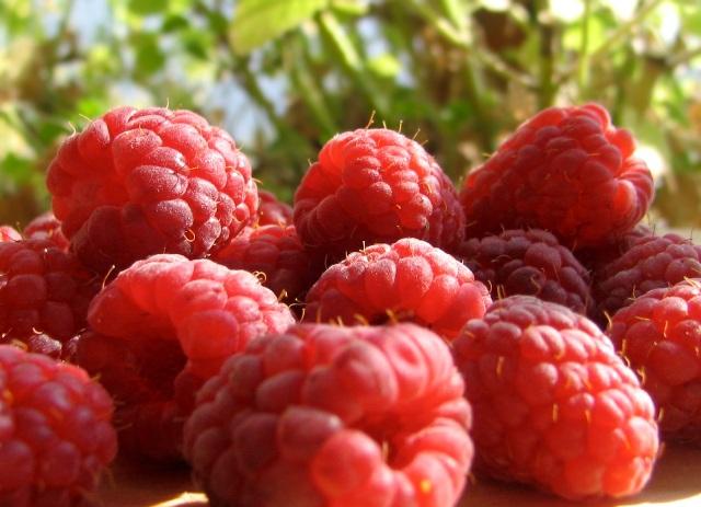 red-raspberry-1_2[1]