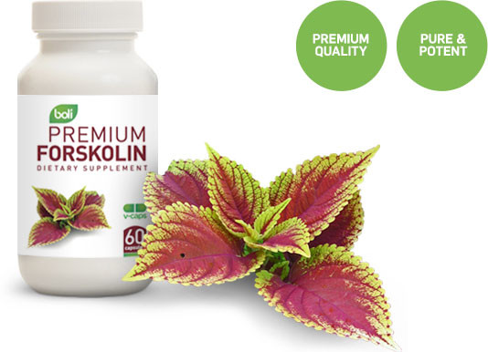 forskolin wholesale & private label