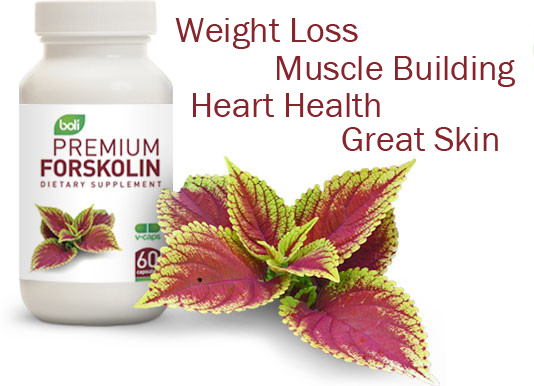 forskolin, wholesale forskolin