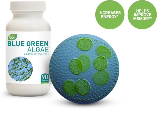 blue green algae wholesale and private labell