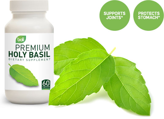 holy basil wholesale and private label